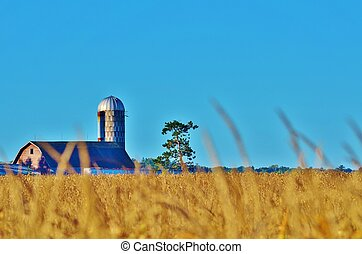 Barn in a field of corn.