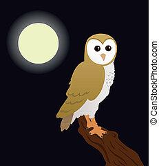 barn owl sitting on a tree at night