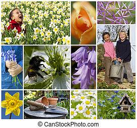 barn spela, fjäder, trädgård, blomningen, montage