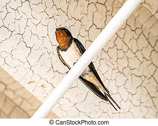 Barn Swallow outside a Japanese train station 1