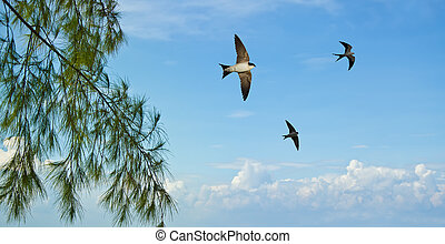 Barn swallow over blue sky background