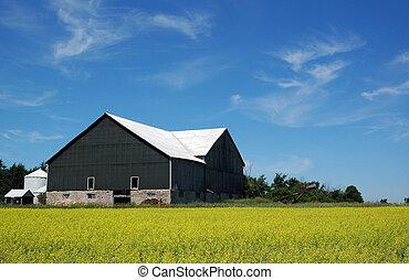 Barn with canola - Barn near Orangeville, ON, next to field...
