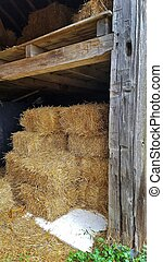 barn with stacked hay bales - entrance of old barn with hay...