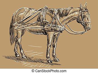 barna ló, hám