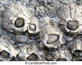 Barnacles growing on barnacles