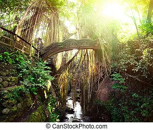 barong, león, puente, en, mono, forest., bali, indonesia