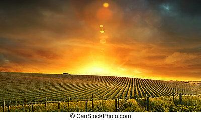 barossa, coucher soleil