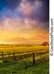 Barossa Glory - Sunrise in the Barossa Valley