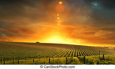 barossa, západ slunce