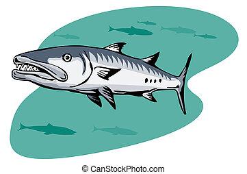 barracuda, acecho