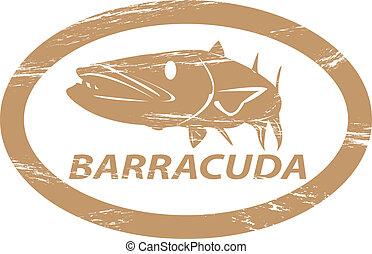 barracuda.