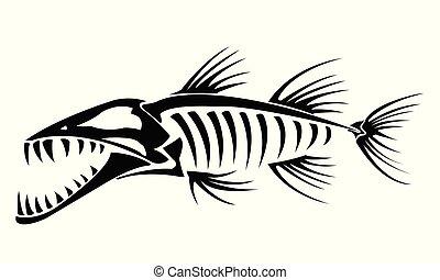 barracuda, esqueleto