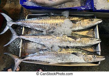 barracuda, mercado