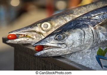 barracuda, tomato., thailand., dientes, pesque alimento, ...