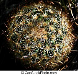 Barrel Cactus 2