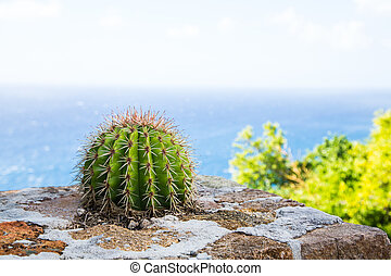 Barrel Cactus on Stone Wall by Sea