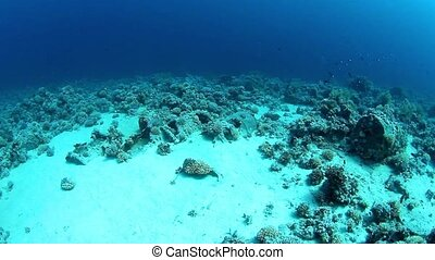 Barrels of oil after shipwreck, reef Tiran, Red Sea, Egypt.