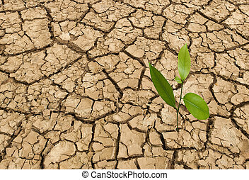 Barren land at summer