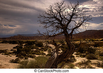 Barren southwestern tree - A barren tree in the sandstone ...