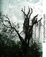 Barren Tree - A dry barren tree photographed against cloudy...