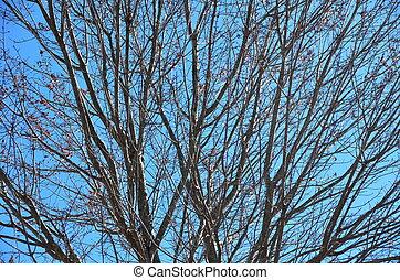 Barren tree branches