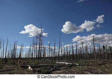 Barren trees in Arizona