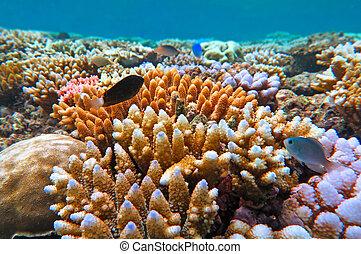 barrera, arrecife, australia, grande, queensland
