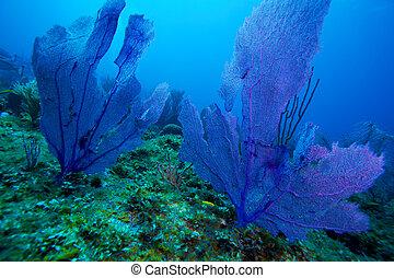 barrera coralina, cerca, cayo, largo, cuba