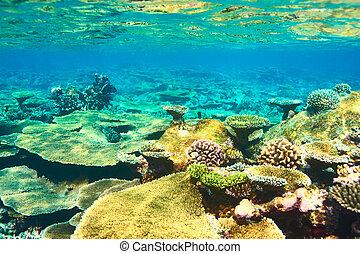 barrera coralina, en, maldivas