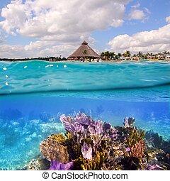 barrera coralina, en, riviera maya, cancun, méxico