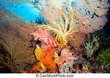 barrera coralina, paisaje
