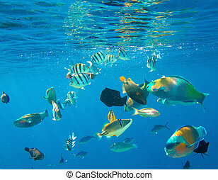 barrera coralina
