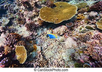 barrera coralina, submarino