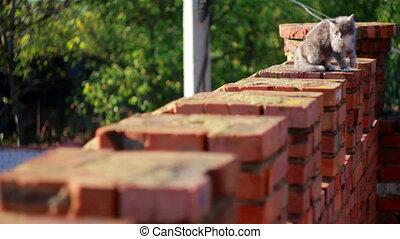 barrière, chat