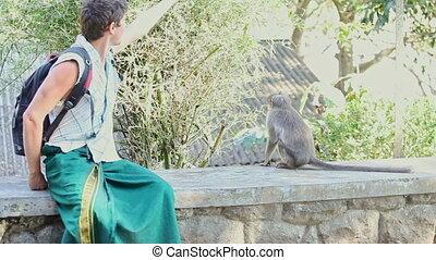 barrière, pierre, singe, assied, nourrit, parc, type, touriste