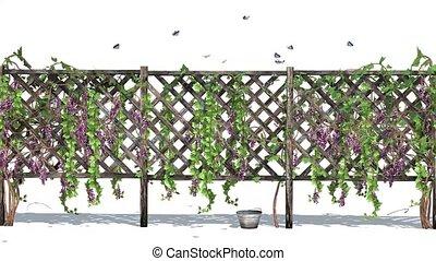 barrière, vigne, vrilles, papillons, fond, blanc