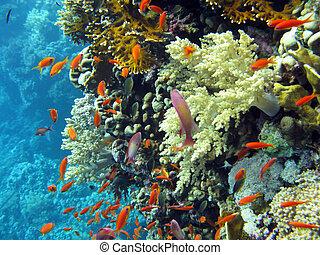barriera corallina, con, secca, di, arancia, pesci