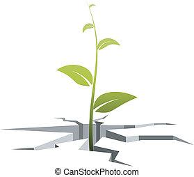 barsten, kiem, illustratie, vector, uit, grows, grond
