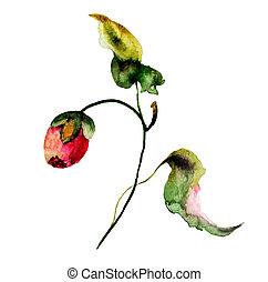 barva vodová, ilustrace, s, květiny
