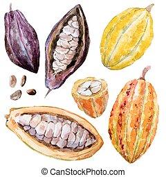 barva vodová, kakaový bob, fazole