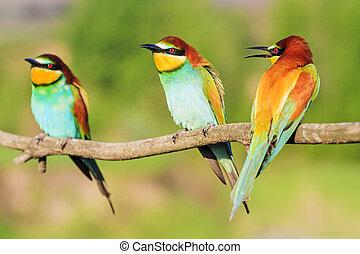 barvitý, sedět, tři, filiálka, ráj, ptáček