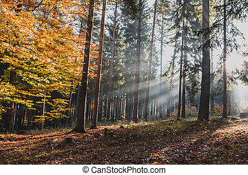 barvitý, slunit se, les, list, paprsek, mlhavý, mlha, krajina, čech, podzim