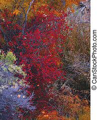 barvy, podzim