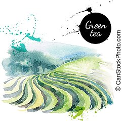 barwiony, herbata, ilustracja, ręka, akwarela, wektor, ...