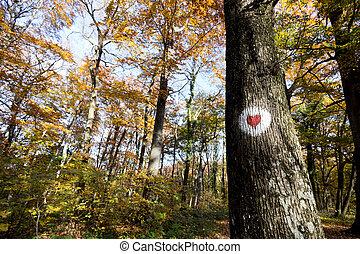 barwiony, serce, drzewo las, czerwony