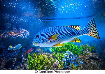 barwny, akwarium