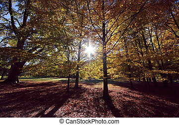 barwny, autumn drzewa