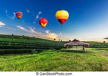 barwny, herbata, na, przelotny, plantacja, zachód słońca, balony, gorące-powietrze, krajobraz
