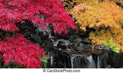 barwny, klon, drzewa, i, wodospad