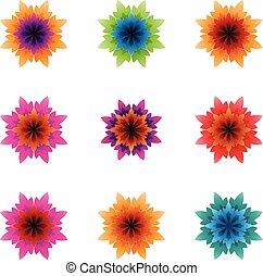 barwny, kolczasty, ilustracja, płatki, jasny, wektor, kwiaty